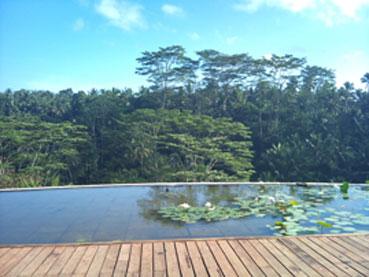 ジャングルにたたずむ隠れ家リゾート...
